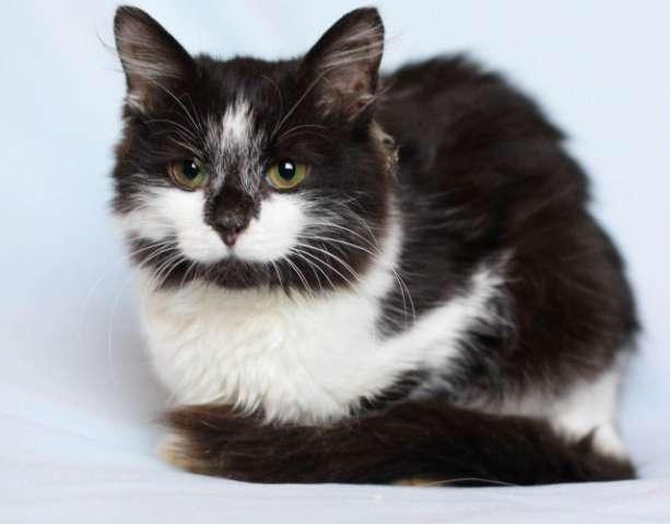 котята в дар тюмень фото #14